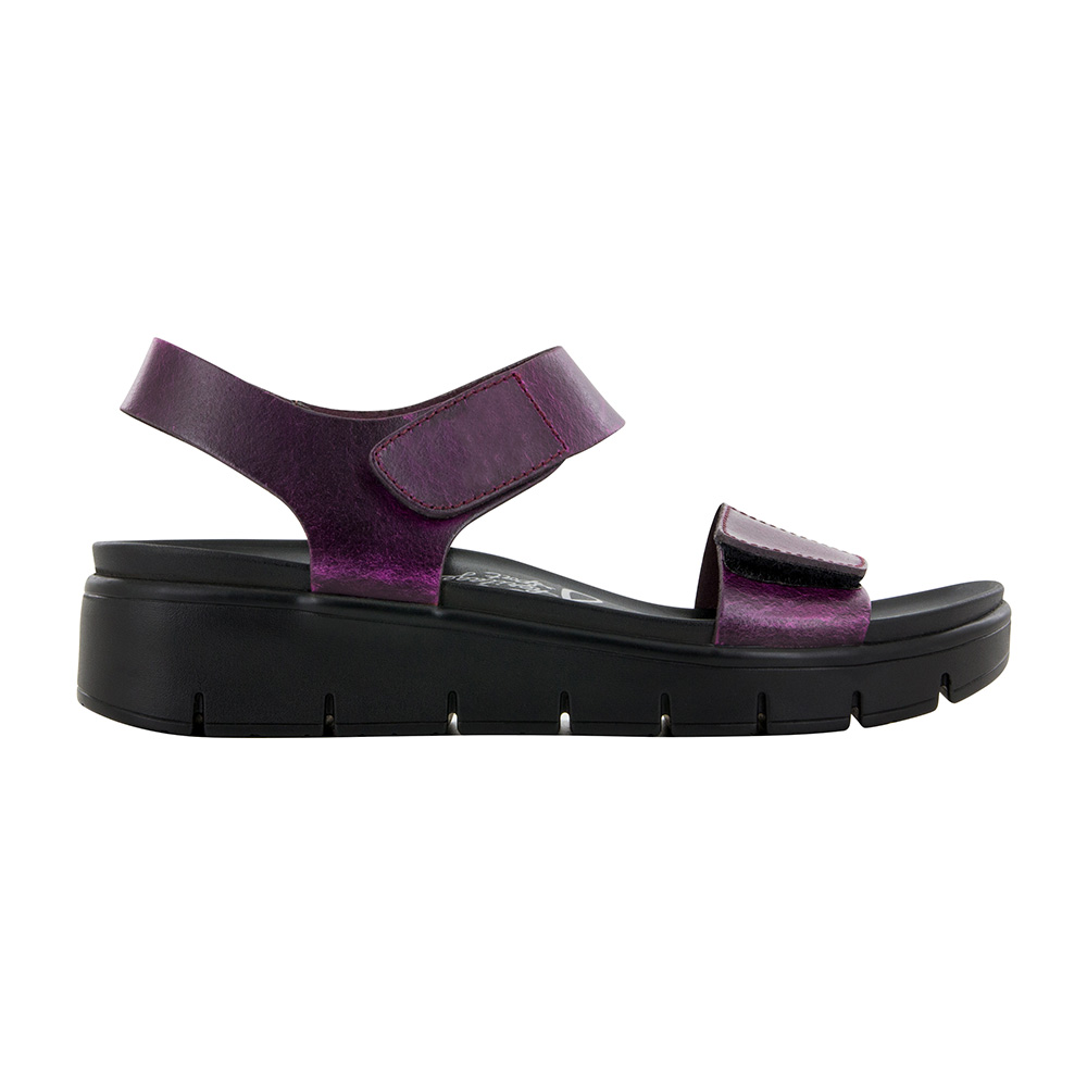 Alegria Playa Purple & Black Crazy Horse